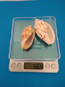 Весы до 2 кг с ценой деления 0,1 г